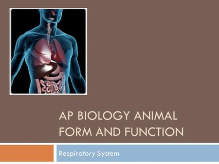 AP BIOLOGY ANIMAL FORM AND FUNCTION Respiratory System.