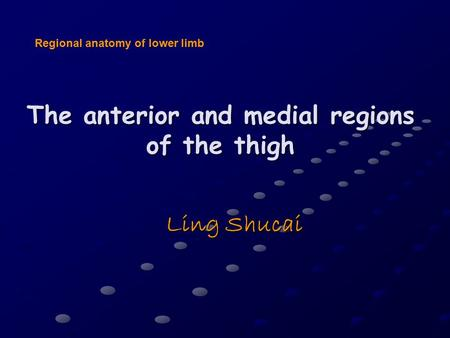The anterior and medial regions of the thigh