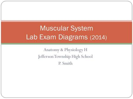 Anatomy & Physiology H Jefferson Township High School P. Smith Muscular System Lab Exam Diagrams (2014)