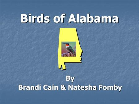 Birds of Alabama By Brandi Cain & Natesha Fomby. The Yellow Hammer TTTThe Yellow Hammer is the State bird. IIIIt can climb up the trunks of trees.