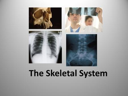 The Skeletal System. The skeletal system consists of: 1. Bones 2. Cartilage 3.Connective tissue ***There are about 206 bones in an adult.