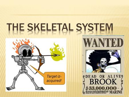 The Skeletal System Target iz-acquired!.