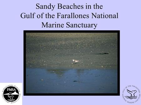Sandy Beaches in the Gulf of the Farallones National Marine Sanctuary.