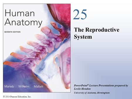 © 2014 Pearson Education, Inc. PowerPoint ® Lecture Presentations prepared by Leslie Hendon University of Alabama, Birmingham 25 The Reproductive System.