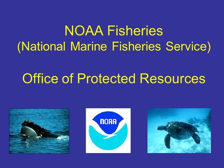 NOAA Fisheries (National Marine Fisheries Service) Office of Protected Resources.
