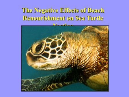 The Negative Effects of Beach Renourishment on Sea Turtle Nesting.