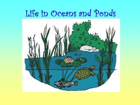 Life in Oceans and Ponds. What is an Ocean? Big body of salty water.