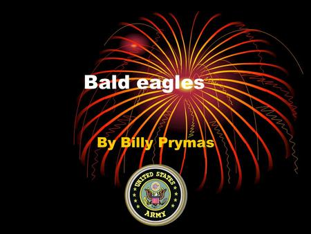 Bald eagles By Billy Prymas. Introduction The bald eagles feet are the most important tools used to eat. The bald eagle is what I chose to research. I.