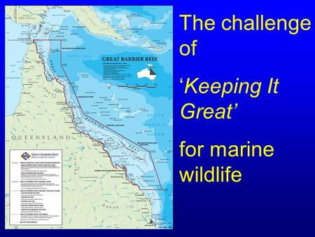 The challenge of 'Keeping It Great' for marine wildlife.