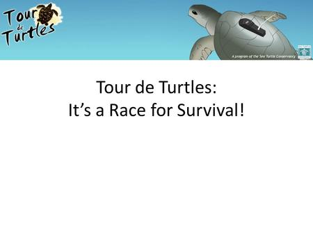 Tour de Turtles: It's a Race for Survival!. Retrieved from