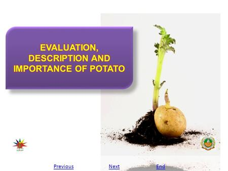 PreviousNextEnd. Evaluation, description and importance of potato Europe would wait until the 1780's before the potato gained prominence anywhere. About.