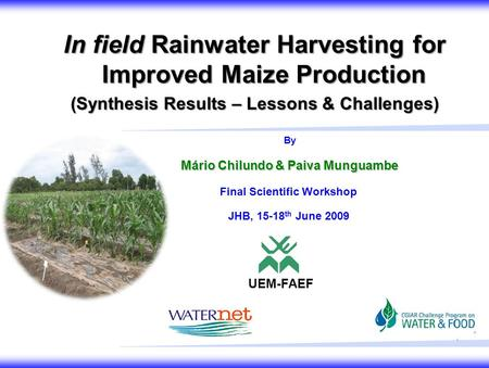 1 In field Rainwater Harvesting for Improved Maize Production (Synthesis Results – Lessons & Challenges) By Mário Chilundo & Paiva Munguambe UEM-FAEF Final.