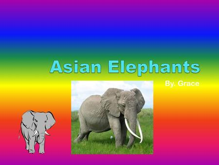 By. Grace. Introduction Everyone loves Asian elephants. In this report you will learn about the Asian elephant's habitat. You will also be learning about.