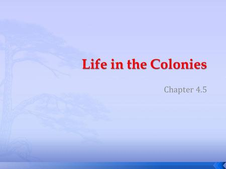 Chapter 4.5.  What class differences existed in colonial colonies?  How did the Great Awakening affect colonial life?  How did the colonist educate.