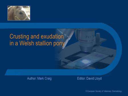 Crusting and exudation in a Welsh stallion pony Author: Mark CraigEditor: David Lloyd © European Society of Veterinary Dermatology.