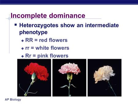 Incomplete dominance Heterozygotes show an intermediate phenotype