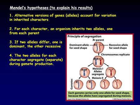 Mendel's hypotheses (to explain his results) 1. Alternative versions of genes (alleles) account for variation in inherited characters 2. For each character,