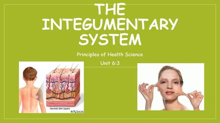 THE INTEGUMENTARY SYSTEM Principles of Health Science Unit 6:3.
