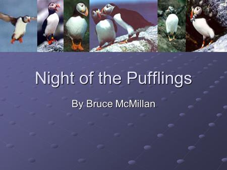 Night of the Pufflings By Bruce McMillan. Meet the Author Bruce McMillan Bruce McMillan.