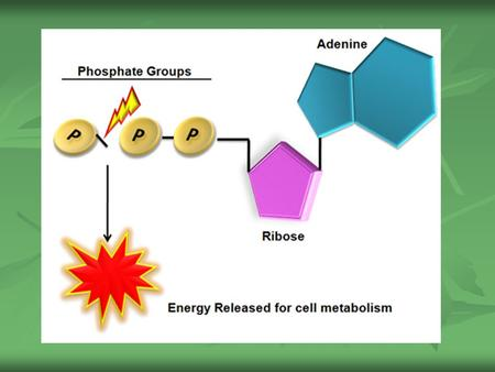 ATP ATP Adenosine Triphosphate (ATP) - One of the principal chemical compounds that living things use to store and release energy Adenosine Triphosphate.