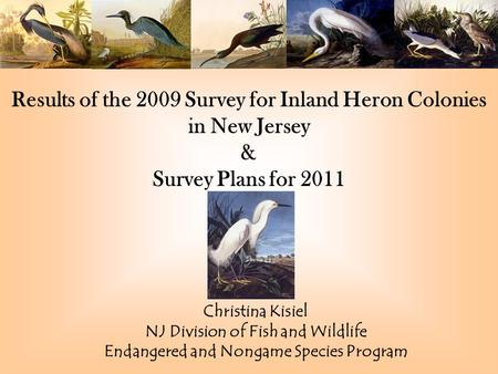 Results of the 2009 Survey for Inland Heron Colonies in New Jersey & Survey Plans for 2011 Christina Kisiel NJ Division of Fish and Wildlife Endangered.