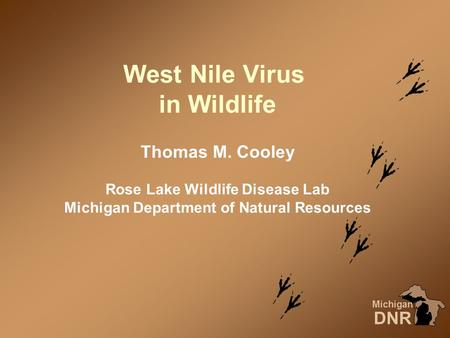 West Nile Virus in Wildlife Michigan DNR Thomas M. Cooley Rose Lake Wildlife Disease Lab Michigan Department of Natural Resources.