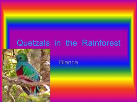 Quetzals in the Rainforest Bianca. Introduction The tropical rain Forests of the world are important. The rain forests are located in Southern Asia, south.