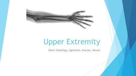 Upper Extremity Elbow Osteology, Ligaments, Muscles, Vessels.
