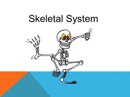 Skeletal System. The human skeleton consists of…well, tradition says 206, but who really cares? More importantly is what the skeleton does. 1.It provides.