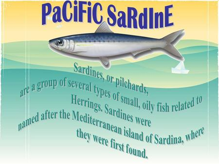 Sardines, or pilchards, are a group of several types of small, oily fish related to Herrings. Sardines were named after the Mediterranean island of Sardina,