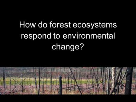 How do forest ecosystems respond to environmental change?