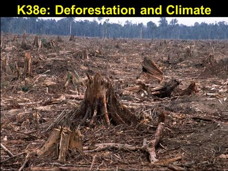 K38e: Deforestation and Climate. Forests Being Cut Faster Than They Can Grow Tropical deforestation, as countries scramble to clear-cut and sell off their.