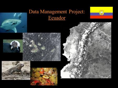 Data Management Project: Ecuador. Project Area Gradicule of the area Geographic coordinates: 5ºN -6ºS -94ºW -75ºW.