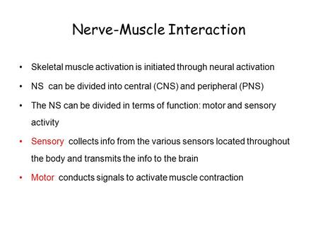 Nerve-Muscle Interaction Skeletal muscle activation is initiated through neural activation NS can be divided into central (CNS) and peripheral (PNS) The.