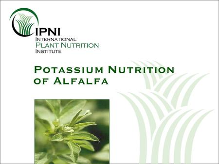 Potassium Nutrition of Alfalfa. Potassium (K) Nutrition of Alfalfa Outline: 1.Plant development 2.Diagnosis 3.Yield and quality 4.Economics 5.Irrigation.
