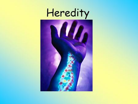 Heredity. Outline What are genes? Gregor Mendel Where can we find our genes? What do our genes do? Our Genes Genetic Trait Tree Where do we get our genes.