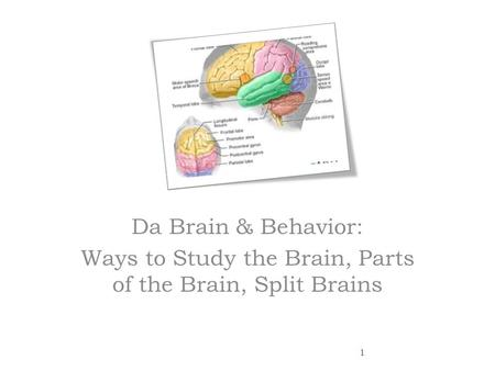 an analysis of the split brain Plos one promises fair, rigorous peer review dobrowolny h, et al (2006) self-referential processing in our brain–a meta-analysis of imaging studies on the self.