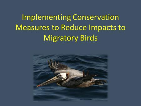 Implementing Conservation Measures to Reduce Impacts to Migratory Birds.