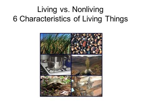 Living vs. Nonliving 6 Characteristics of Living Things.