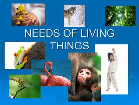 NEEDS OF LIVING THINGS. Four Basic Needs  Living things must satisfy their basic needs for energy, water, living space, and stable internal conditions.
