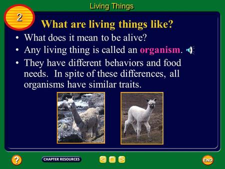 What are living things like? What does it mean to be alive? Any living thing is called an organism. They have different behaviors and food needs. In spite.
