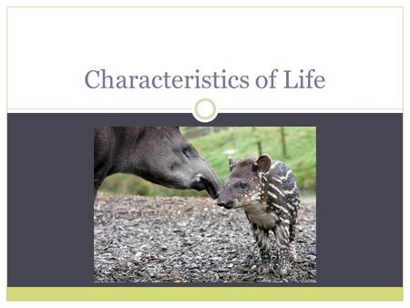 Characteristics of Life. The Eight Characteristics of Life  1. Made of one or more cells  2. Displays organization  3. Grows and develops  4. Reproduces.
