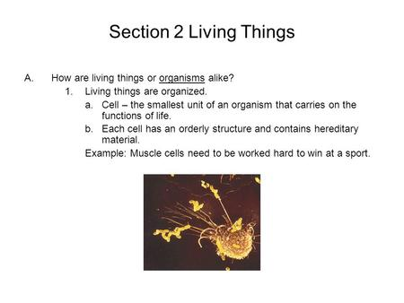 Section 2 Living Things A.How are living things or organisms alike? 1.Living things are organized. a.Cell – the smallest unit of an organism that carries.