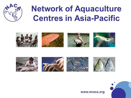 Www.enaca.org Network of Aquaculture Centres in Asia-Pacific.