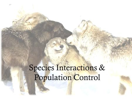Species Interactions & Population Control. Five Major Interactions Interspecific Competition Predation Parasitism Mutualism Commensalism.