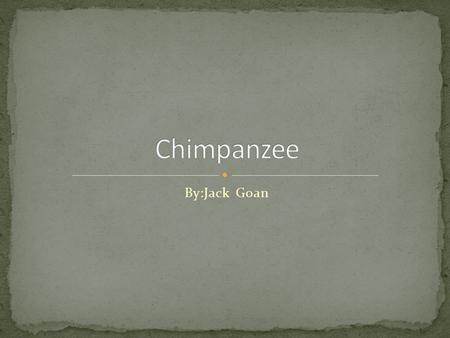 By:Jack Goan. Chimpanzees are very smart. They know how to make and use tools. In fact they are the animal closest to a human. Chimps are also very easy.