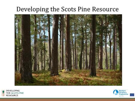 Developing the Scots Pine Resource. The Partnership Three year Northern Periphery Project involving partner s from Scotland, Finland, Norway and Sweden.