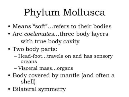 "Phylum Mollusca Means ""soft""…refers to their bodies Are coelemates …three body layers with true body cavity Two body parts: –Head-foot…travels on and has."