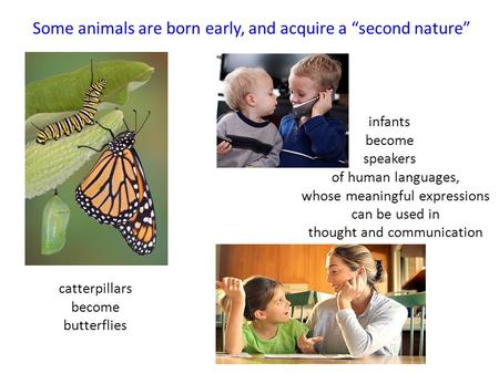 "Some animals are born early, and acquire a ""second nature"" catterpillars become butterflies infants become speakers of human languages, whose meaningful."