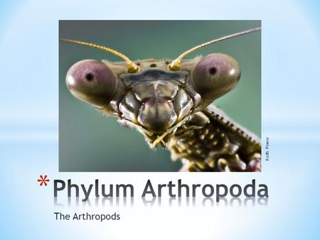The Arthropods Keith Power. * Arthropods are by far the most successful of all animals * Well over 1,000,000 species * Some say over 30 million species.
